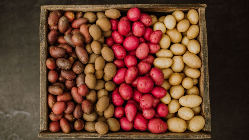 Final Preparations for the seed potato planting season