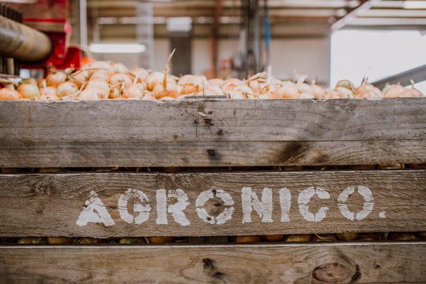 Quality the target for Tasmania onions