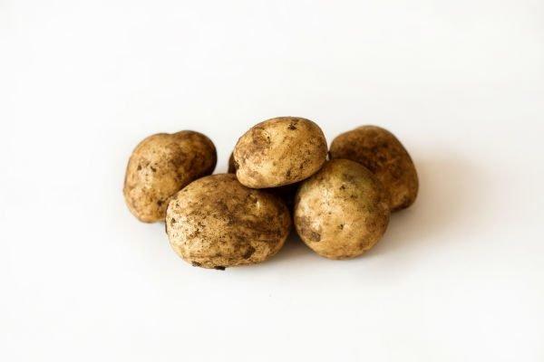 Sebago Seed Potatoes