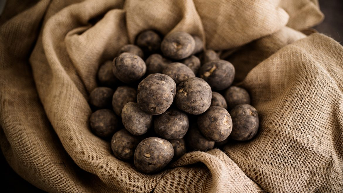 Why use certified seed to grow potatoes