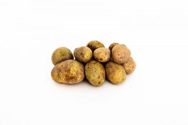 Kennebec Seed Potatoes