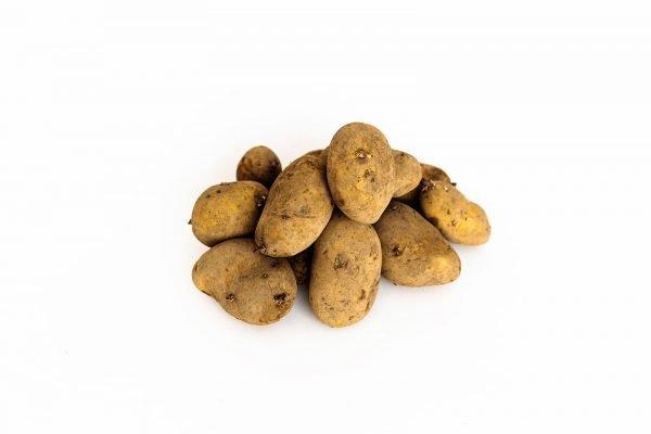 Spunta Seed Potatoes